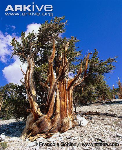 Treehugger Gospel (4/4)